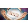 «Донорство яйцеклеток»