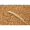 Пшеница. .