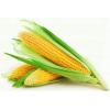 Кукурудзу