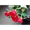 Доставка цветов Мукачево
