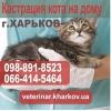 Кастрация кота на дому Харьков. Стоимость 550 грн.