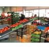 Работники на овощной завод в Польше