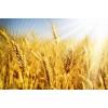 В Одессе зерно комплекс участок 3 га с Ж/Д, есть причал.