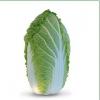 Семена пекинской капусты KS 340 F1 (Китано)