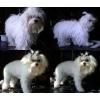 Стрижка собак в Одессе