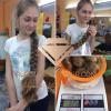 Продать волосы в Николаеве дорого Платим за волосы дорого