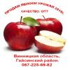 Яблоки урожая 2018 опт, свежие Украина
