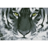 Схема для вышивки бисером Взгляд тигра