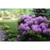 Уход за садом, озеленение, услуги садовника, посадка и обрезка деревьев