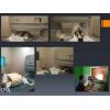 Бизнес МРТ диагностика для животных (можно использовать как человеческий)