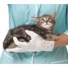 Кастрация кота на дому - 550 грн. в Харькове