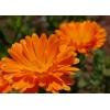 Цветы календулы 50 грамм