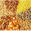 Продажа зерновых: кукуруза, ячмень, пшеница.