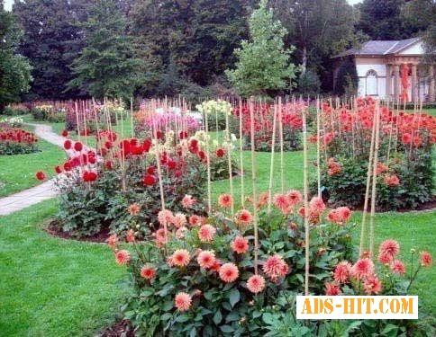 Опоры и подпоры для растений,  кустарников,  цветов,  винограда!