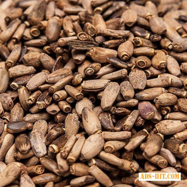 Семена расторопши на масло.