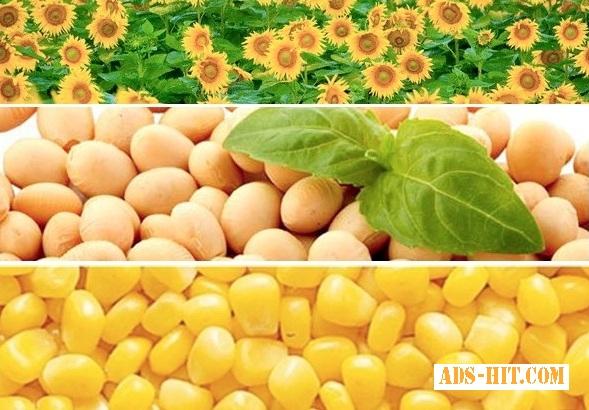 Подсолнух соняшник соя кукуруза дорого