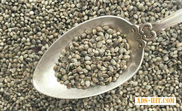 Семена конопли на масло.