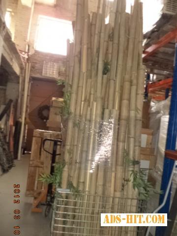 Бамбук декоративный.