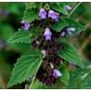 Белокудренник чёрный (Ballota) трава 50 грамм