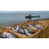 Работник на рыбзавод в Польше