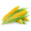 Кукурузу Урожай 2017г