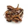Красный корень (копеечник) 50 грамм
