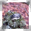 Срібна каблучка «Новий день»