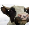Молочный порошок для пищевой промышенности