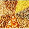 Продажа зерновых (пшеница, кукуруза, ячмень) .