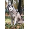 Бесплатно фотографирую собак