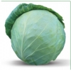 Семена белокочанной капусты Honka F1 / Хонка F1 фирмы Китано