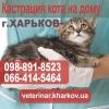 Кастрация кота на дому в Харькове - 550 грн.