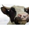 Сыворотка молочная сухая оптом по Украине