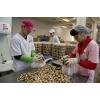 Рабочие на фабрику конфет в Польшу