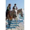 Катание на лошадях и пони
