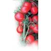 Семена томата Aswan F1 / Асвон F1