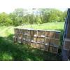 Пчелопакеты на весну 2018 года с доставкой