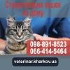 Стерилизация кошек на дому. Харьков. 950 грн.