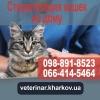 Стерилизация кошки Харьков