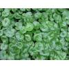 Копытень европейский (трава, листья) 50 грамм