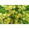 Цвет липы (липовый цвет, цветки липы) 50 грамм
