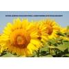 Семена подсолнечника семка насіння соняшника дорого