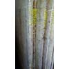 """Мрамор - """" домашний камень """" ; Мрамор - это особый материал, который гармонично сочетает в себе , как высокие технические хар"""