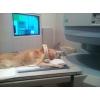 Диагностика МРТ животным (официально)