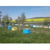 Бджолопакети с доставкой карпатка 2019